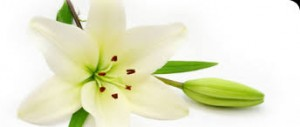 bereavement counselling in stoke on trent Image of a Lilly
